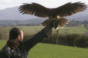 falconry-300x200